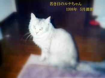 IMG_0001-004.jpg